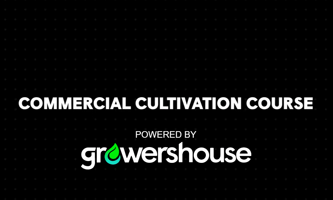 Learn How To Grow Cannabis On A Commercial Scale
