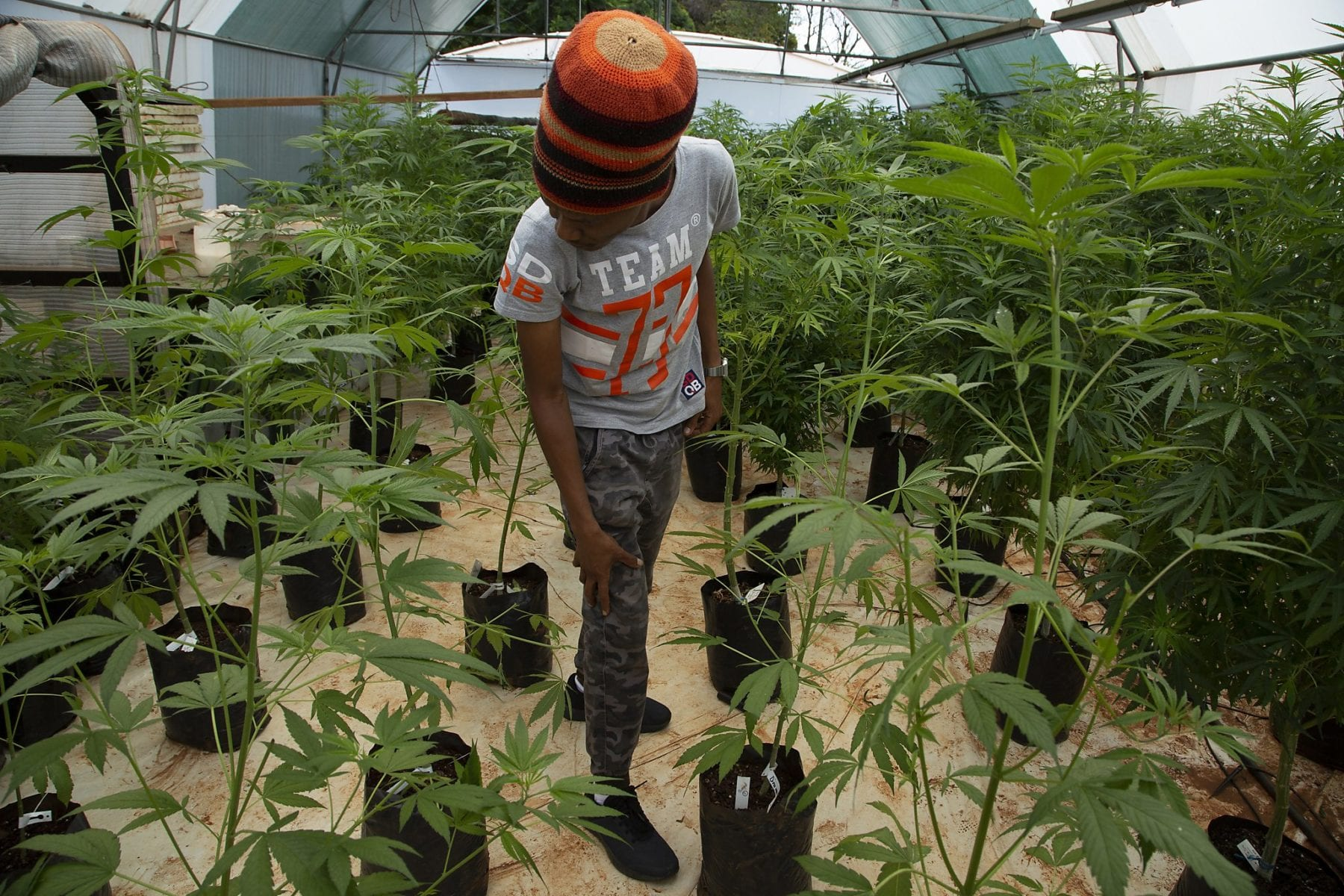 Malawi has joined the list of African nations to change its laws on cannabis.