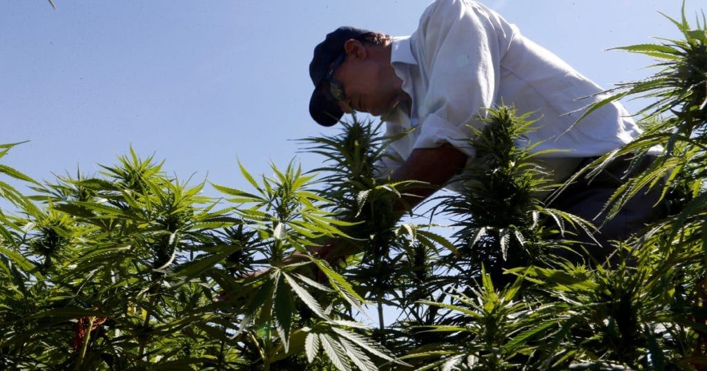 Lebanon becomes first Arab country to legalize cannabis farming