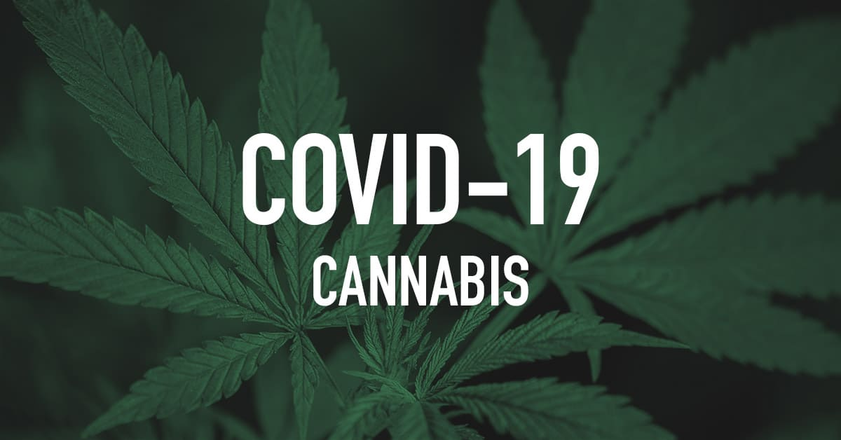 strong cannabis may be an effective treatment for coronavirus covid-19