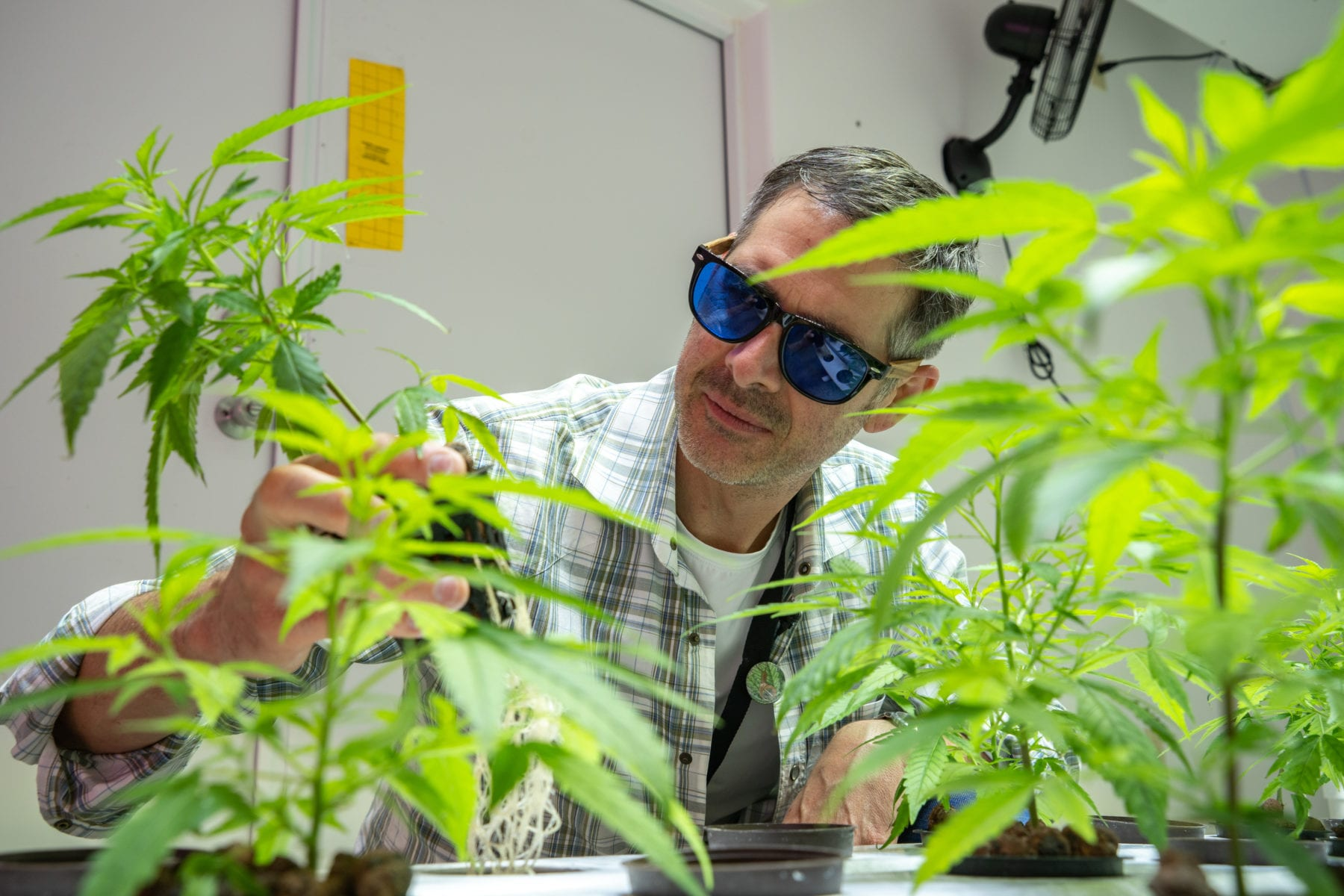 Cannabis Business Consultant - Cameron Bravmann