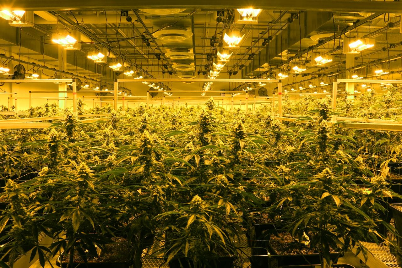 Three Massachusetts marijuana companies fined for use of pesticides, control violations