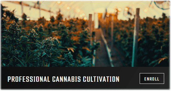 professional cannabis cultivation growers-network-university-free-online-course